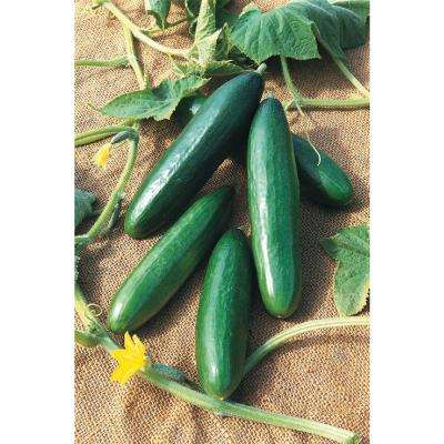 Cucumber Diva (35 Seed Packet)