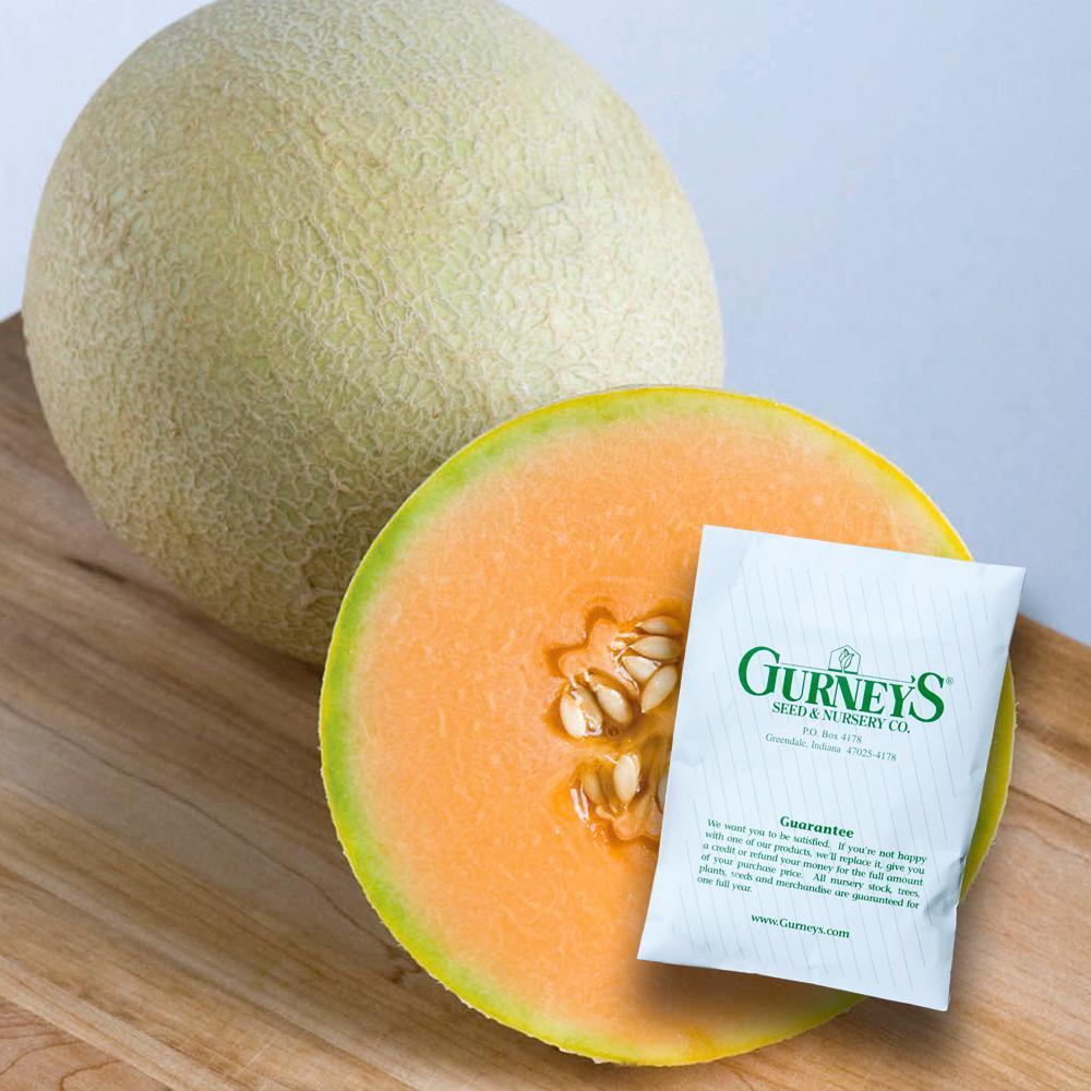 Gurney's Melon Sarah's Choice Hybrid (20 Seed Packet)