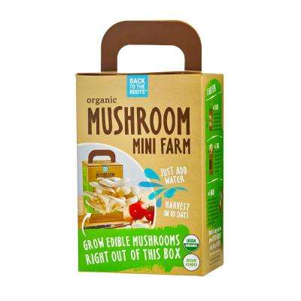 Mini Mushroom Farm
