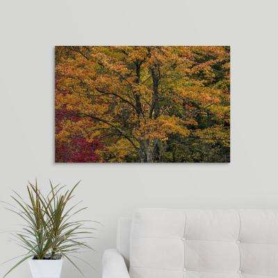 """Fall color on the coast of Maine"" by  Scott Stulberg Canvas Wall Art"