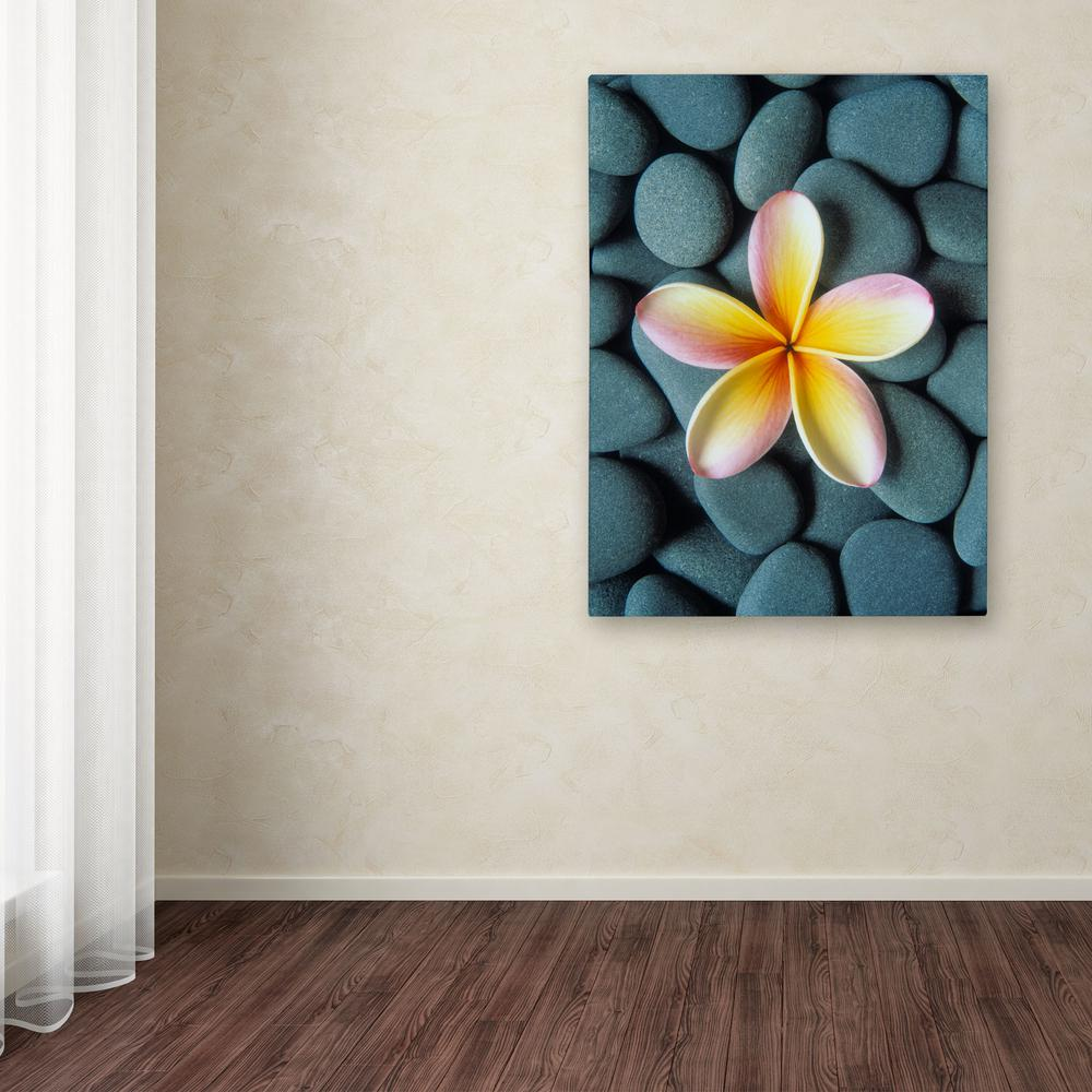 "Trademark 24 in. x 18 in. ""Plumeria & Pebbles 5"" by David..."