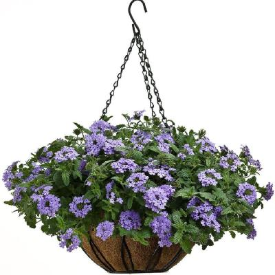 12 in. Devon Hanging Basket with AquaSav Coconut Liner