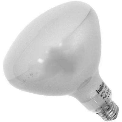Halco 300-Watt R40 Flood Specialty Pool Spa Replacement 12-Volt Light Bulb (1-Bulb) 104040