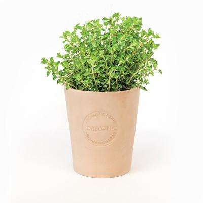 Organic Oregano Seeds in Natural Clay Planter