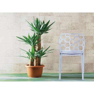 Honeycomb Clear Dining Chair