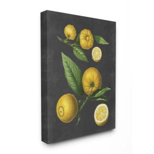 ''Botanical Drawing Lemons On Black Design'' by Lettered and Lined Canvas Wall Art 48 in. x 36 in.