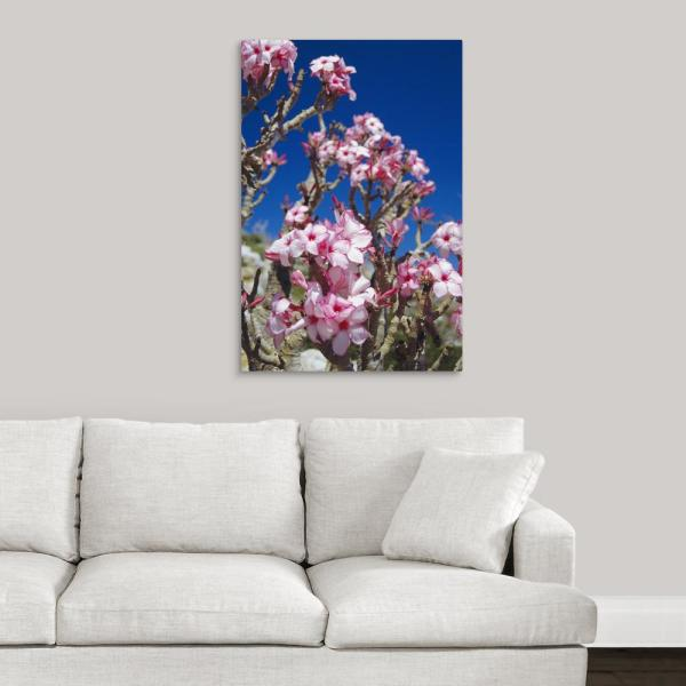 Greatbigcanvas Desert Rose Flowers By Diccon Alexander Canvas Wall