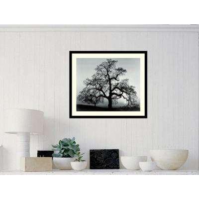 "27 in. W x 23 in. H ""Oak Tree, Sunset City, California, 1962"" by Ansel Adams Framed Art Print"