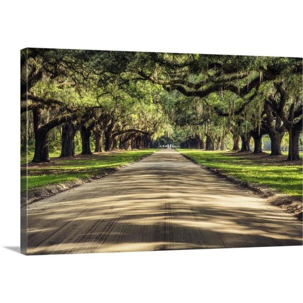 GreatBigCanvas ''Oak tree lined road at Boone Hall Plantation, Charleston'' by