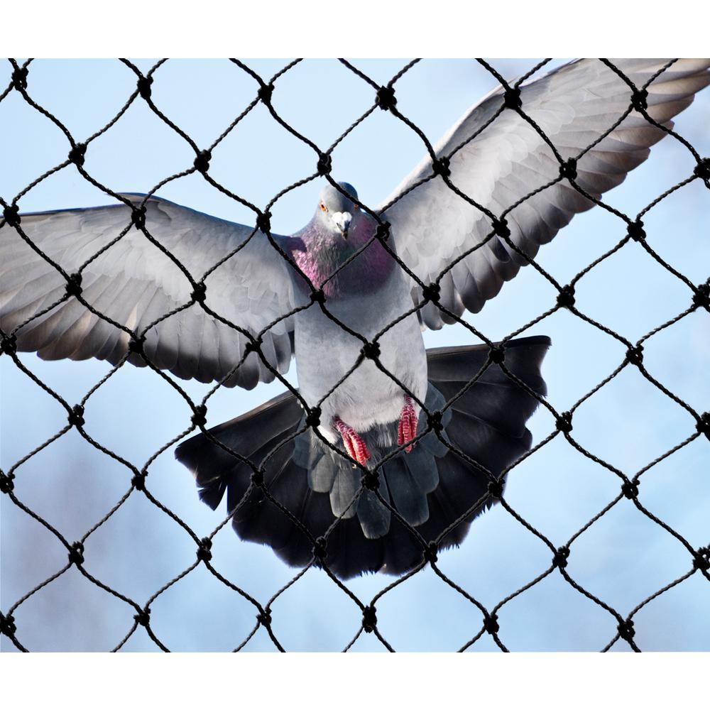Bird B Gone Garden Bird Netting 3/4 in  Mesh - Black - 14 ft