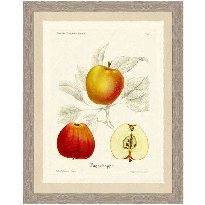Apple Sketch Framed Archival Paper Wall Art (22x28)