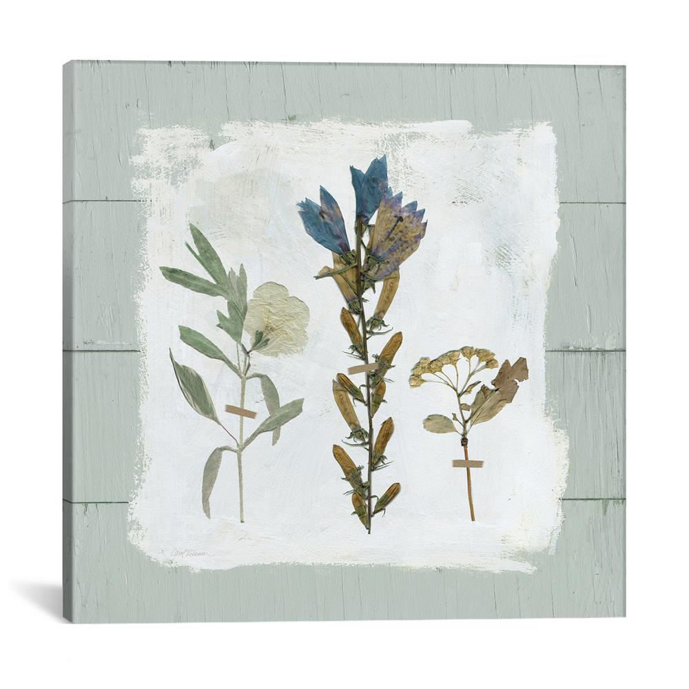 """Pressed Flowers On Shiplap I"" by Carol Robinson Canvas Wall Art"
