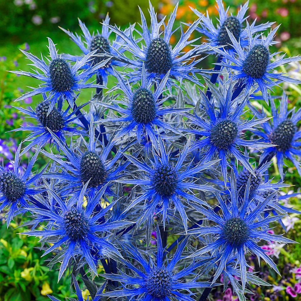 Flowering Perennial Perennials Garden Plants Flowers The