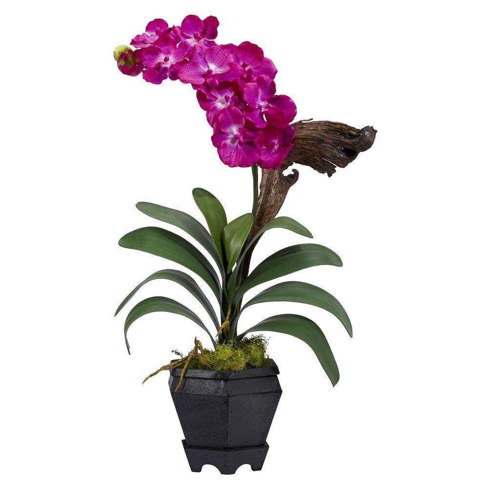 24 in. H Beauty Vanda with Black Hexagon Vase Silk Arrangement
