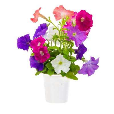 Petunia Refill (3-Pack) for Smart Herb Garden