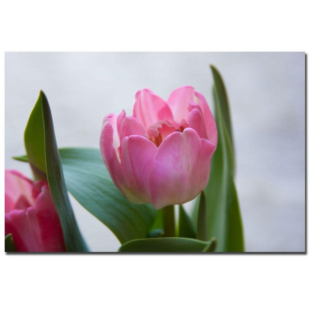 24 in. x 16 in. Pink Tulip III Canvas Art