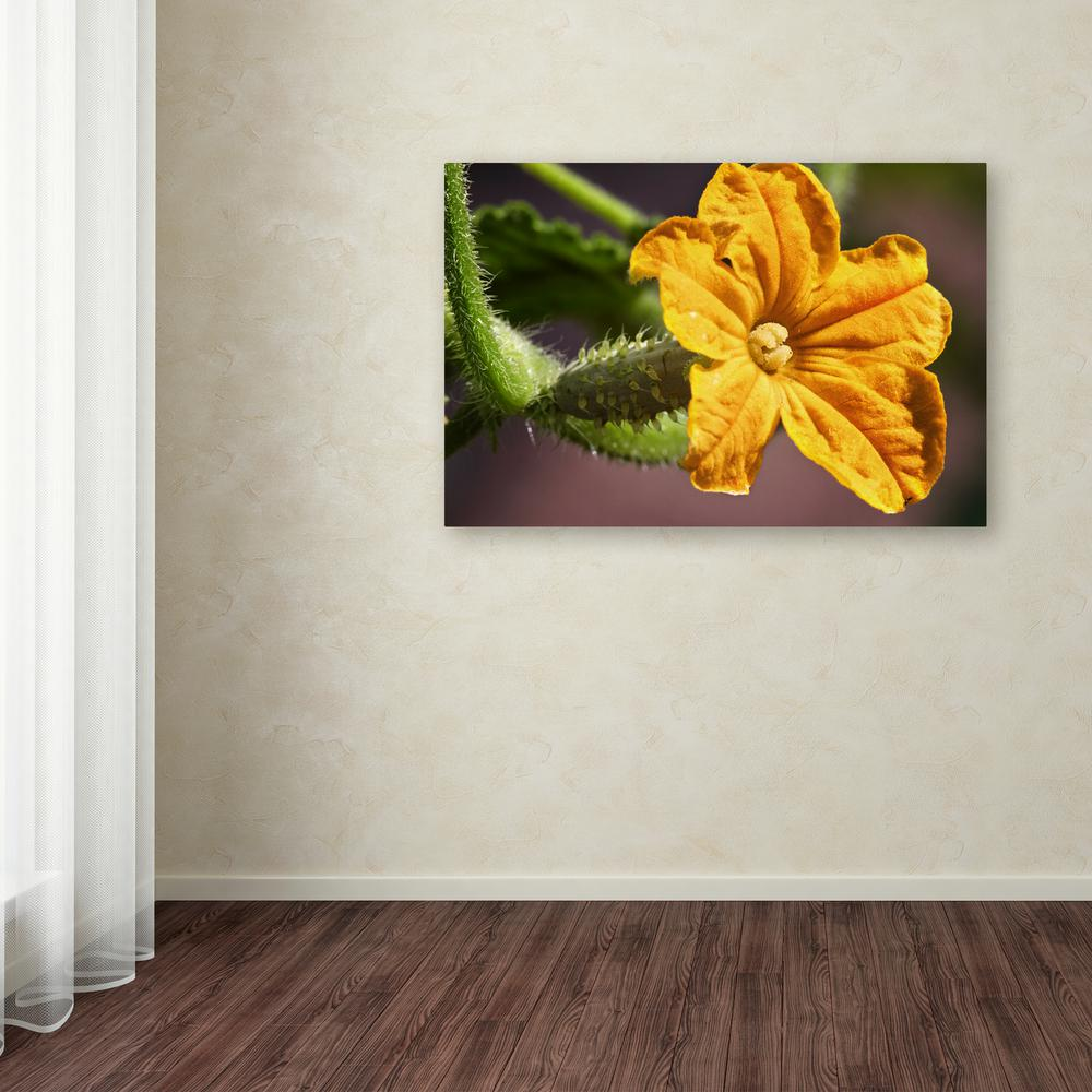 "16 in. x 24 in. ""Cucumber Bloom"" by Jason Shaffer Printed"