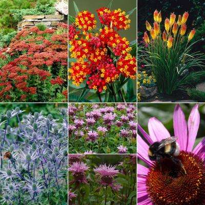 Gardening For Birds And Butterflies Collection Bulbs (28 Set)
