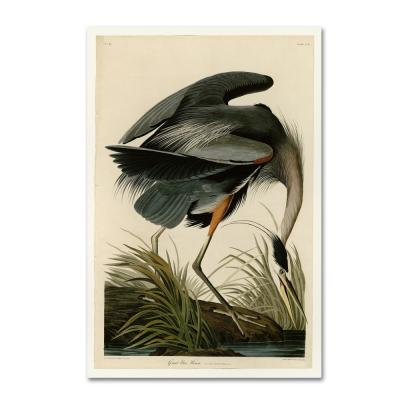 Trademark Fine Art Great Blue Heron By John James Audobon Floater Frame Animal Wall Art 22 In X 32 In Aa01280 C2232gg The Home Depot