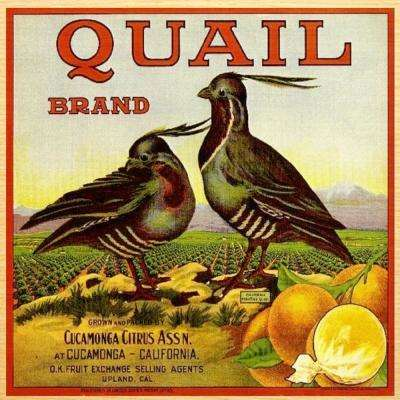 Beautiful 19 in. x 19 in. Wall Art with vintage fruit crate art Quail design.