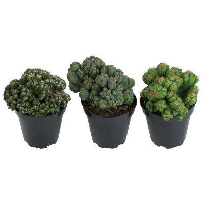 3.5 in. Assorted Monster Cactus (3-Pack)
