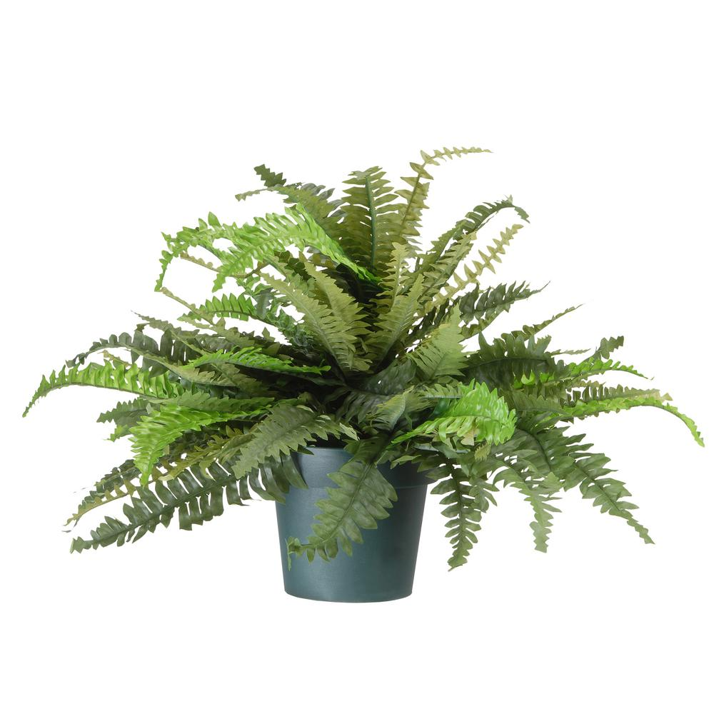 National Tree Company 20 In Fern Plant Qfrn8 800 20f The Home Depot