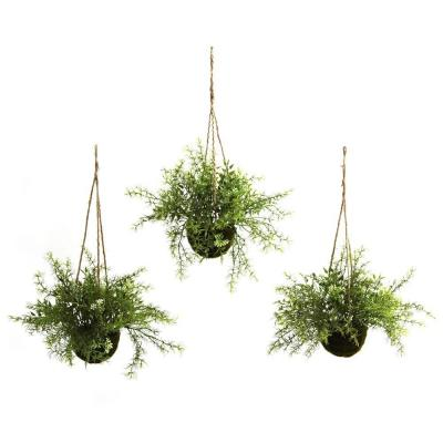 Ruscus, Sedum and Springeri Hanging Basket (Set of 3)