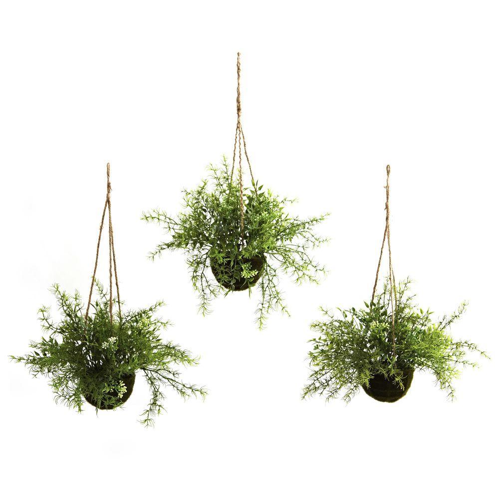 Ruscus, Sedum and Springeri Hanging Basket (Set of 3)