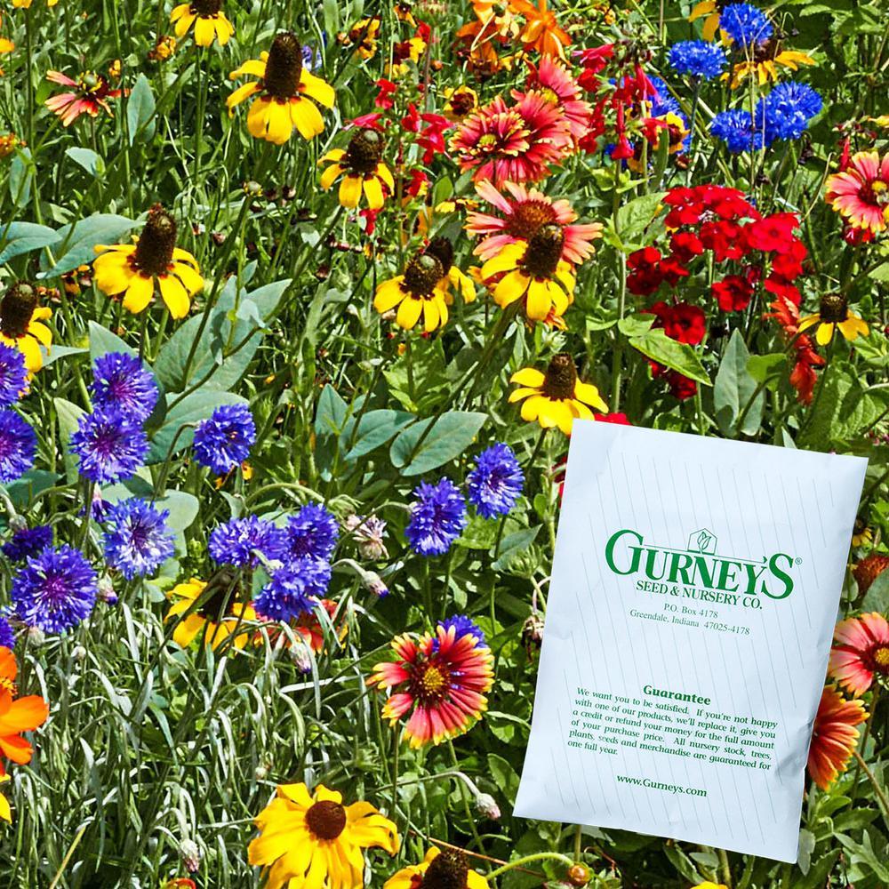 Southwest Wildflower Seed Mixture (300 Seed Packet)