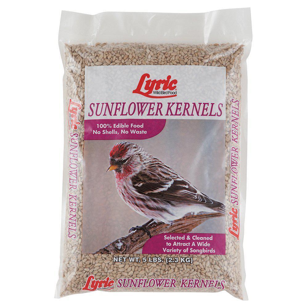 5 lb. Sunflower Kernels