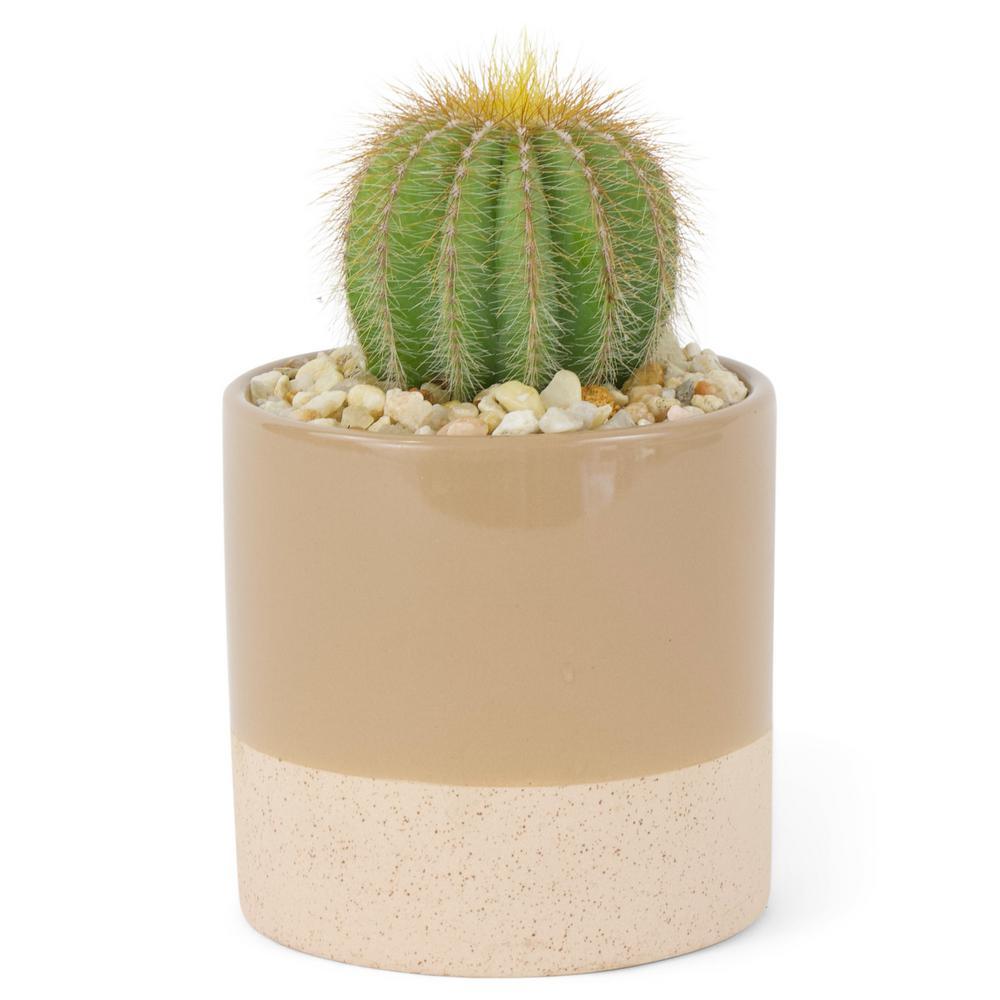 1.38 Pt. Cactus Plant in 4 In. Ceramic Pot