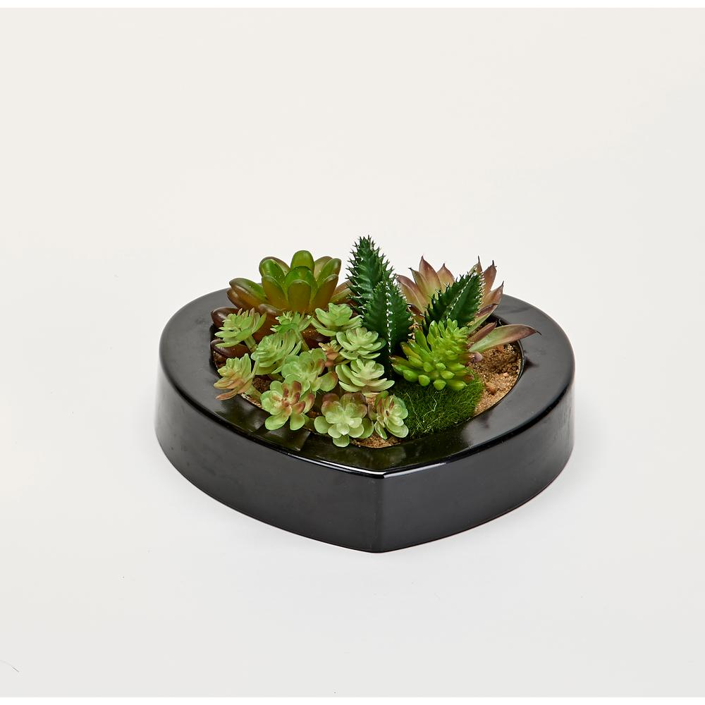 Worth Imports Mixed Succulents in 7 in. Heart Shaped Black Plastic Container