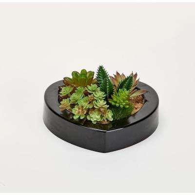 Mixed Succulents in 7 in. Heart Shaped Black Plastic Container