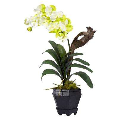 24 in. H White Vanda with Black Hexagon Vase Silk Arrangement