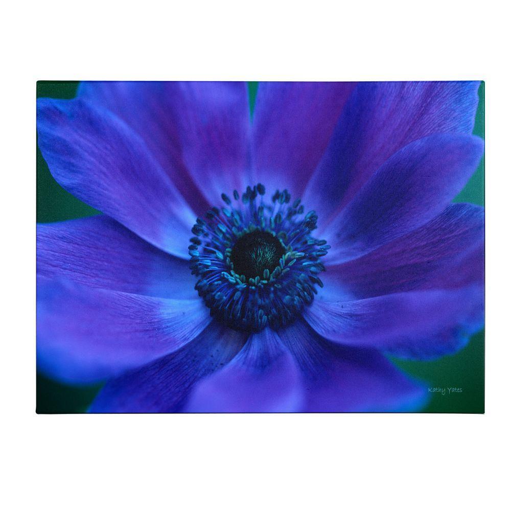 Trademark Fine Art 22 in. x 32 in. Beautiful Anemone Canvas Art