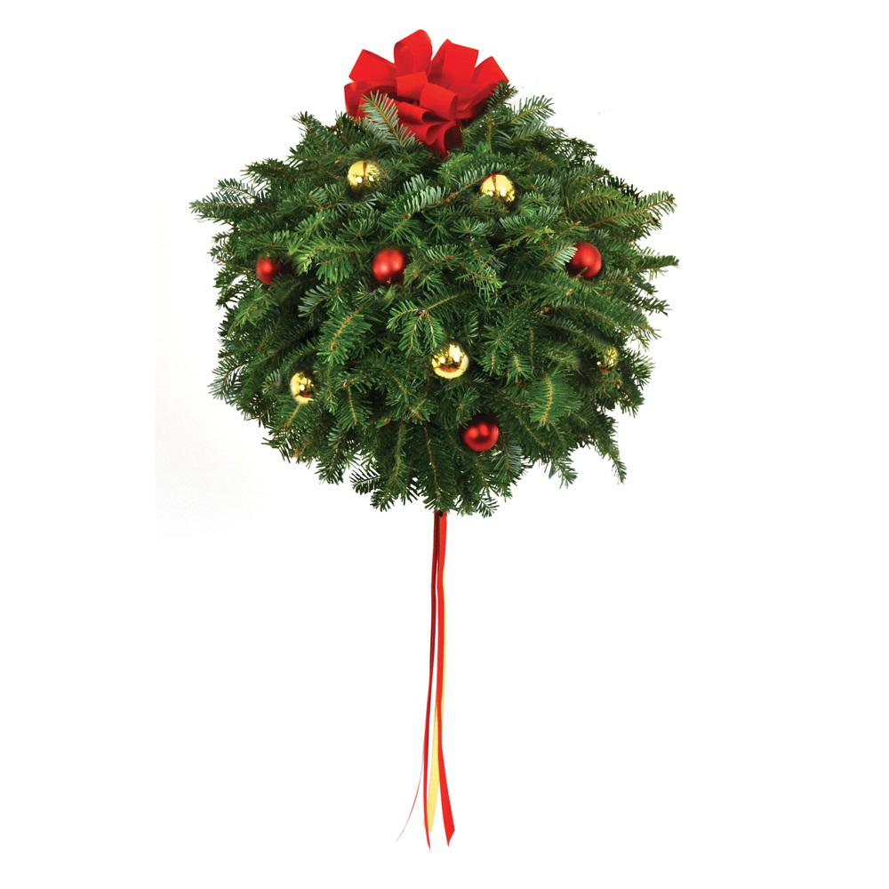 14 in. Live Fraser Fir Kissing Christmas Ball with Red and Gold ...
