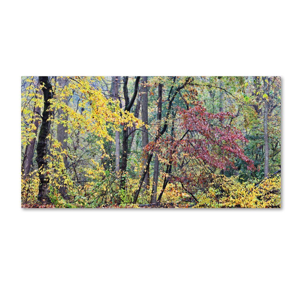 12 in. x 24 in. Autumn Mist Canvas Art