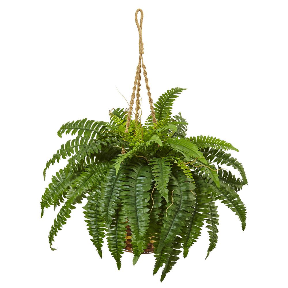 Boston Fern Hanging Basket 6930 The Home Depot