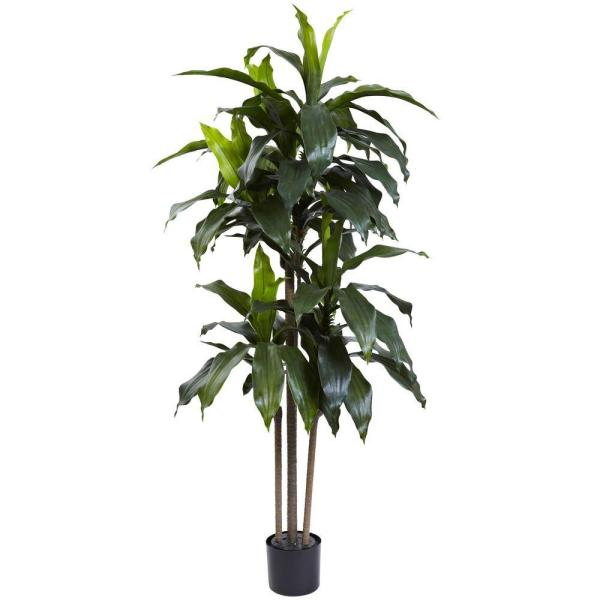 5 Ft. Indoor/Outdoor Uv Resistant Dracaena Plant by Nearly Natural