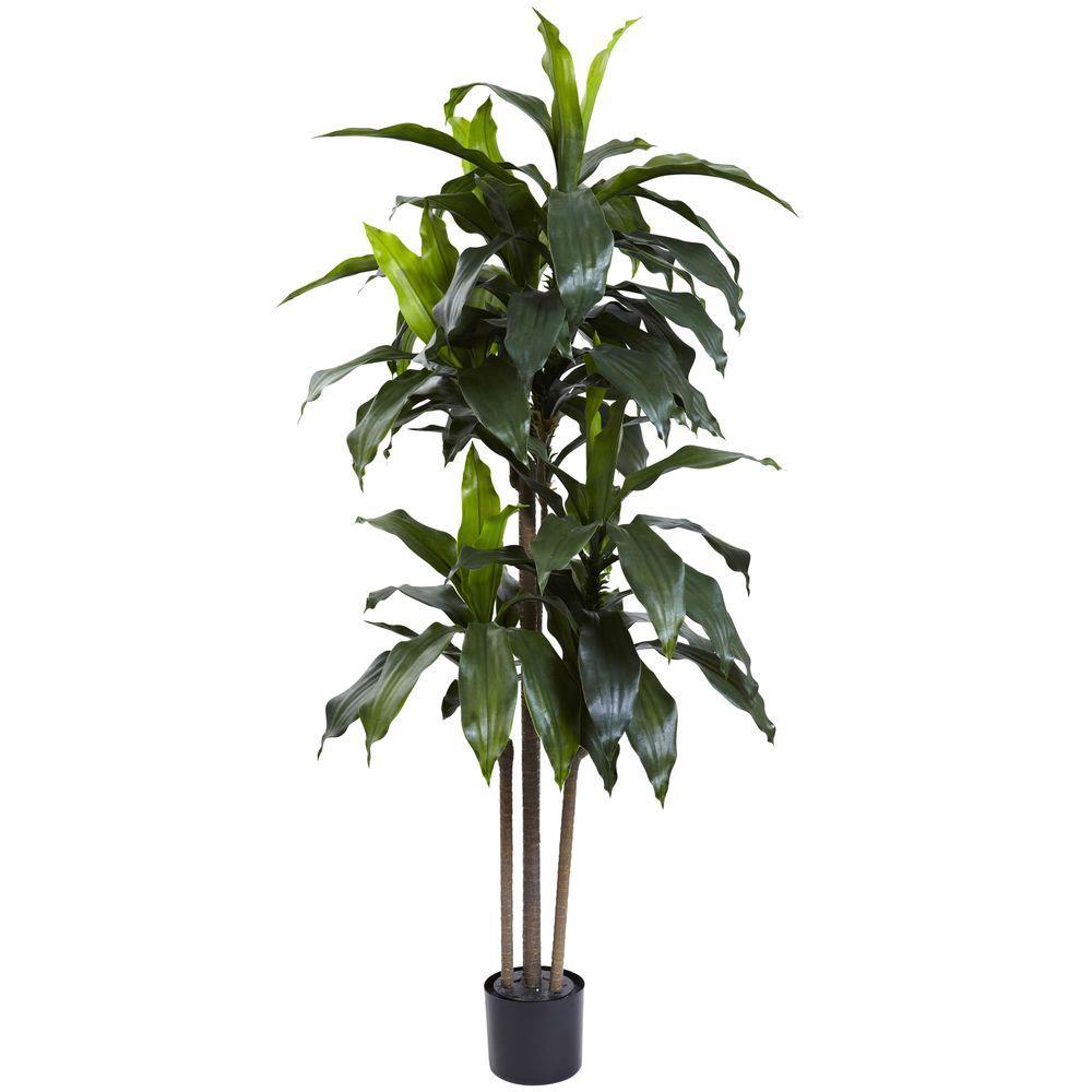 5 ft. Indoor/Outdoor UV Resistant Dracaena Plant