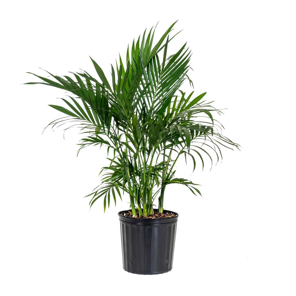house-plants-20132-64_1000 Palm Plants For Home on herb plants for home, water plants for home, potted plants for home, indoor plants for home, vine plants for home, decorative plants for home, tropical plants for home,