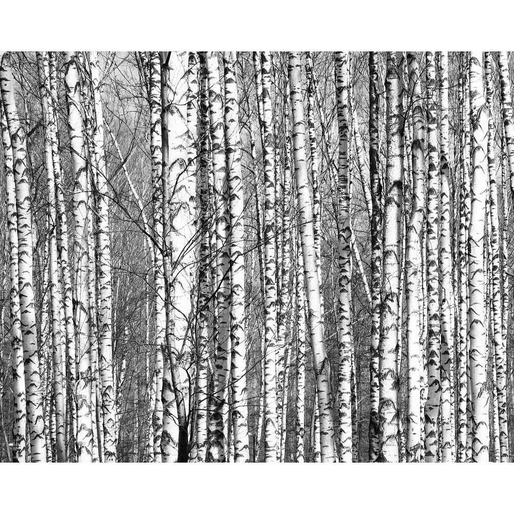 Brewster Wood for the Trees Wall Mural, Grays