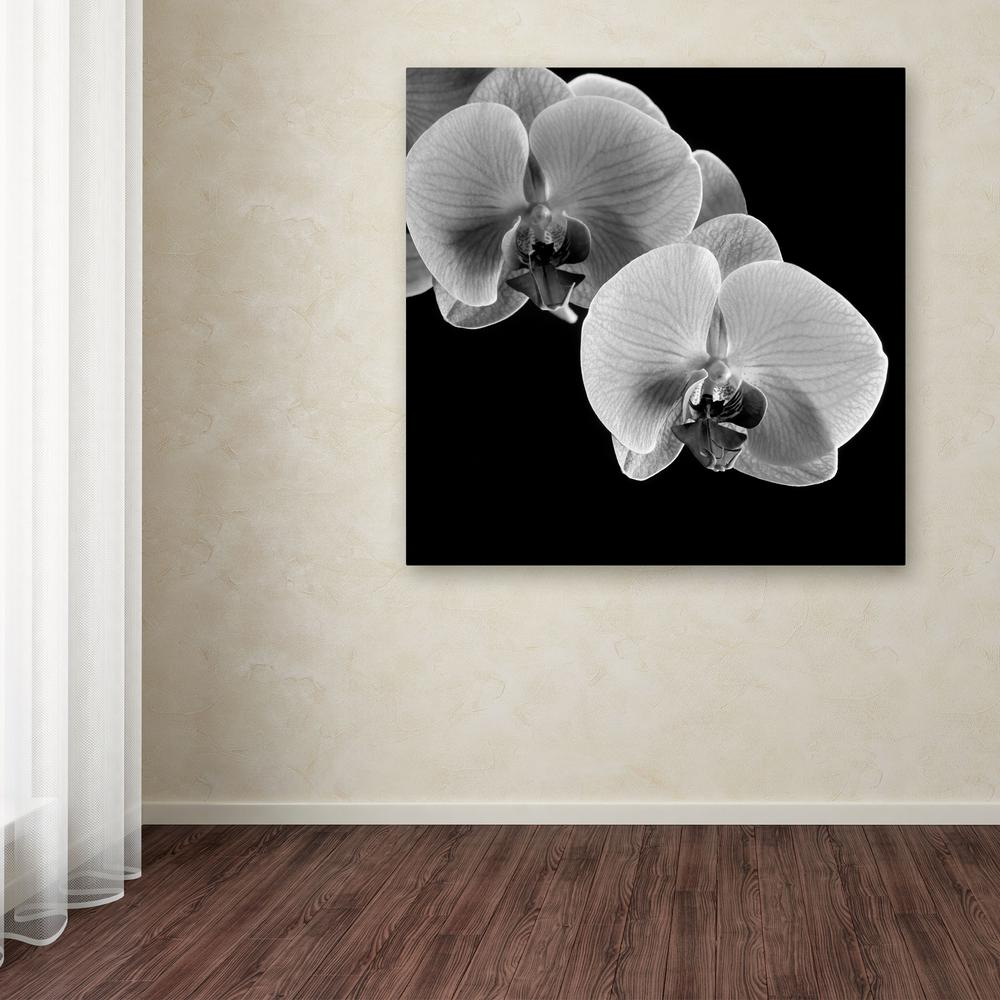 "14 in. x 14 in. ""Orchids"" by Michael Harrison Printed Canvas"