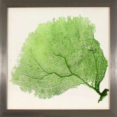 17.75 in. x 17.75 in. Green Sea Fan Study Printed Framed Wall Art