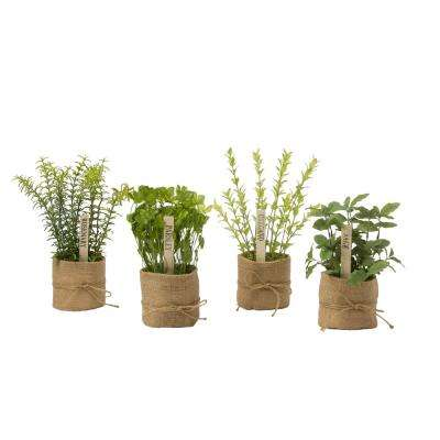 Herb Collection 11.75 in. Herbs in Burlap Wrap (Assortment of 4)