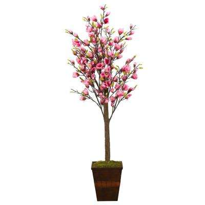 6 ft. Indoor Cerise Magnolia Tree in Square Wooden Planter