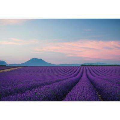 Provence France Wall Mural