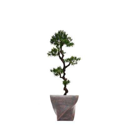 58 in. Tall Yacca Tree in Planter