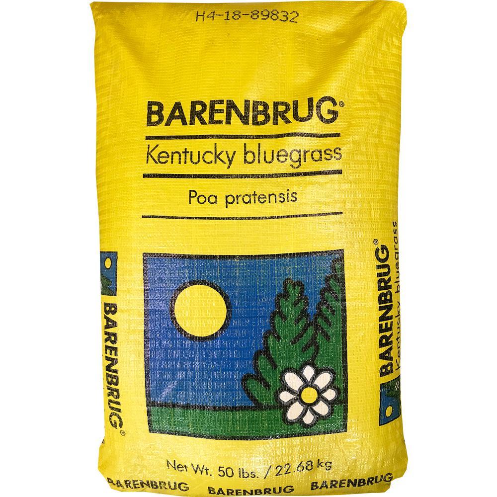 50 lb. Barrister Kentucky Bluegrass Seed