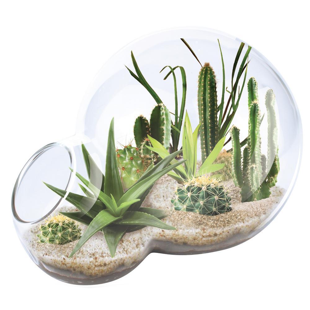 Double Sphere Glass Terrariums Desert Escape Growarium Indoor Garden Terrarium Indoor Garden Seed Starter Kit